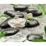 Pure Orchids 8-319 Wall Mural